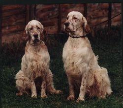 Spangle & Gordon