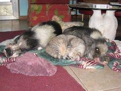 Laddie, Dharma, Daisy