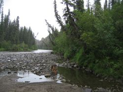 Tributary to the Porcupine River