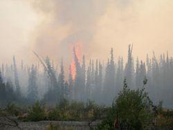 Forest Fire along the Sheenjek