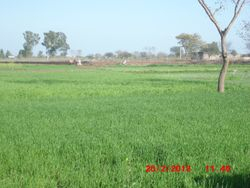 dhakkar greenery