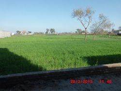 greenenry
