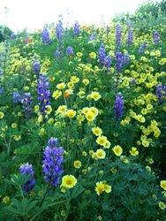 Wild Flowers3