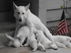 puppies @ 4 weeks - doesn't the 4th of July mean freedom?