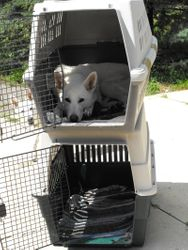 Diamond's version of 'kennel up!'