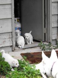 the back door's open! let's go!