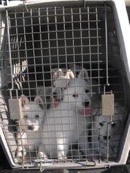 our first road trip together - to Eclipse Kennels to be tested and tattooed! (14 July '09)