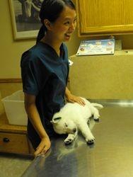 I told you I can sleep anywhere (Maverick at 1st vet visit)