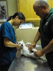 1st vet visit
