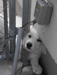 can't I come out? (Wilbur --> Cane)