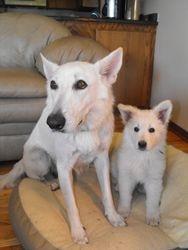 Dakota and Brinkley (black collar male - Pongo)