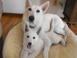 Dakota and JaDen (red collar female - Lady