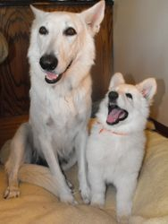 Dakota and Nala (orange collar female)