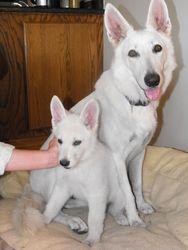 Dakota and Cane (green collar male - Wilbur)