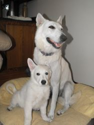 Dakota and Jasmine (purple collar female)