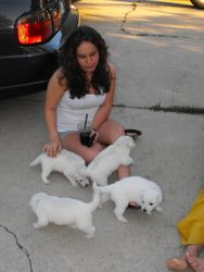 puppies and a refreshing drink, that's life!