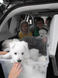 a carload of joy