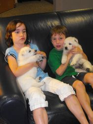 my helpers while visiting the Ronald McDonald House with the puppies