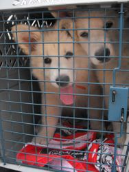 Nala joining Cane on trip to Colorado and home in Wiley. Nala will be loved as a pet.