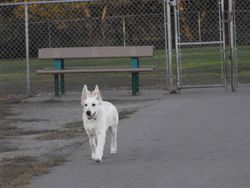 proud Andes enjoys the dog park