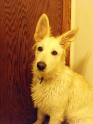 Andes after bath