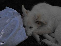 peaceful in sleep or awake, Andes