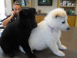 Baire and Andes at the vets