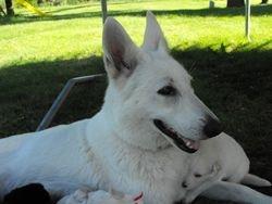 pretty Dakota with pups @ 3 weeks