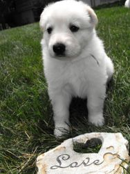 Andes (Andy) - purple ribbon female - 4th born @ 4 weeks