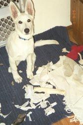 Dakota as a puppy - around 3 months