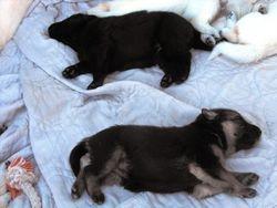 sleeping Baire and Fuji @ 2 - 1/2 weeks