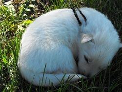 sleeping Rocky @ 2 - 1/2 weeks (black ribbon male)