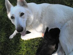 Dakota and Bear @ 2 - 1/2 weeks
