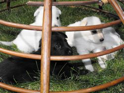 Baire and 3 friends -- trapped @ 4 weeks