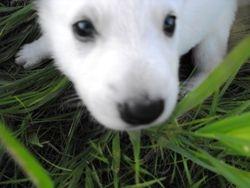 Sierra @ 4 weeks in the tall grass