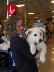 Rocky visits PetSmart