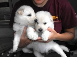 Sierra and Timmy @ 4 weeks