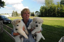 Logan and Rocky @ 7 weeks with sire's owner, Judy