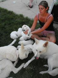 Ashley in midst of canine family