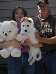 Tessa and her new litter mate ready to return to Illinois where she'll be spoiled ROTTEN !!