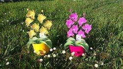 Orhideja iz najlonk: RUMENO-BELA in ORHIDEJNO VIJOLICNO-BELA