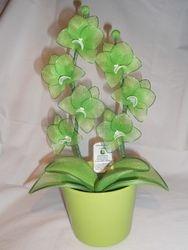 Orhideja iz najlonk: ZELENO-BELA