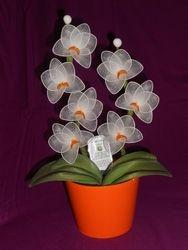 Orhideja iz najlonk: BELO-ORAN?NA