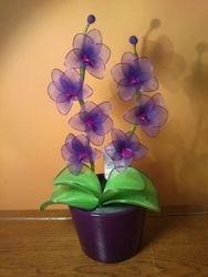 Orhideja iz najlonk: TEMNO VIJOLICNO-ORHIDEJNO VIJOLICNA