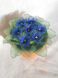 Primula iz najlonk: MODRA