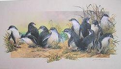 Fairy Penguines $65