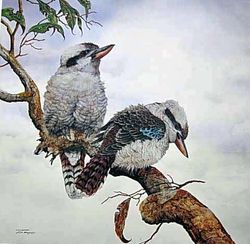 Kookaburras $350