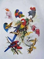 My Favourite Parrots