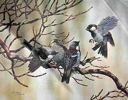 Sparrows $80