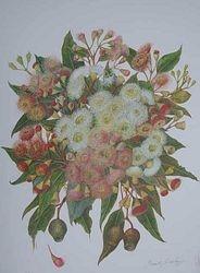Flowering Gums $60